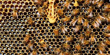 Polline, miele, propoli e pappa reale. I doni delle api